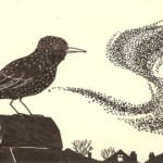 Starling murmuration7 - One starling and the flock